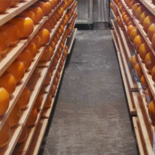 Hundreds of wheels of delicious Gouda cheese aging on wooden shelves.