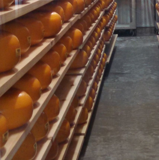 Gouda in curing room