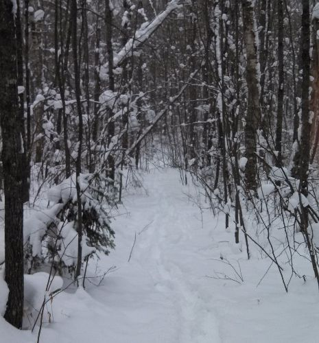 Many trails for snowshoeing in the winter can be found.