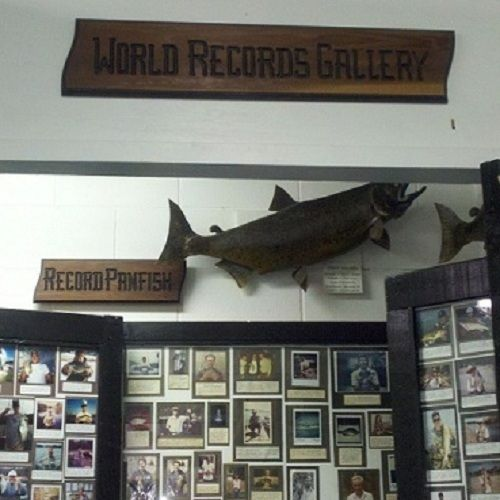 More fishing records shown in the World Record's Gallery