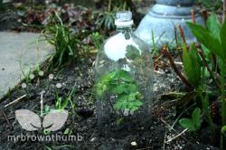 Plastic Bottle Garden Cloches