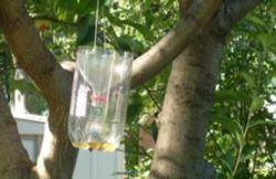 Plastic Bottle Yellow Jacket Trap