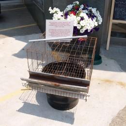 Standard battery cage for a chicken, copyright takomabibelot