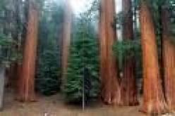 Start a Scout Hiking Program