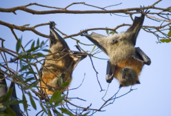 Beautiful Bats - Creatures of the Night
