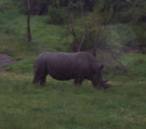 Wet Rhino.