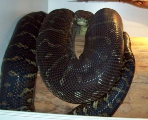 Basking snake.