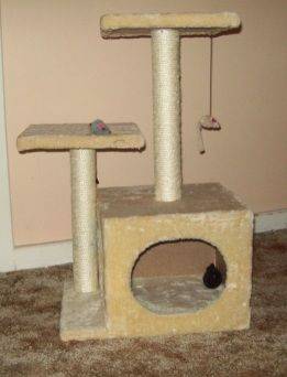 A Scratching Post Is A Must