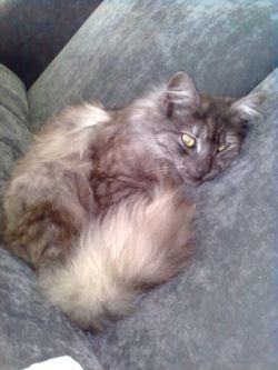 Harry. my sister's cat