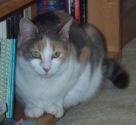 Tia in the Bookcase.