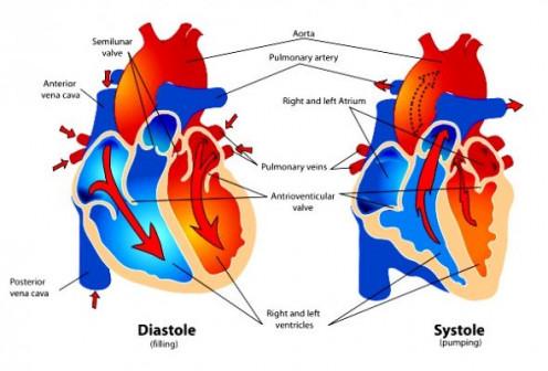 Heart diagram.