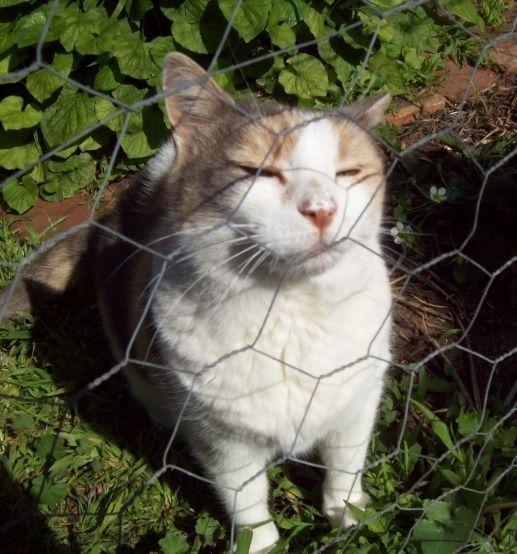 Cat enjoying the sun.