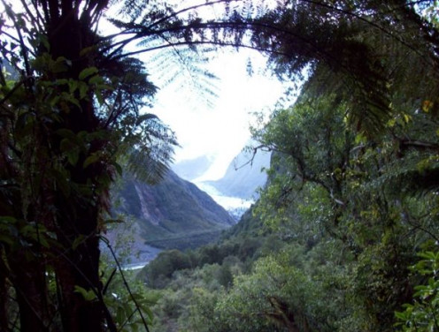 Fox Glacier through trees.