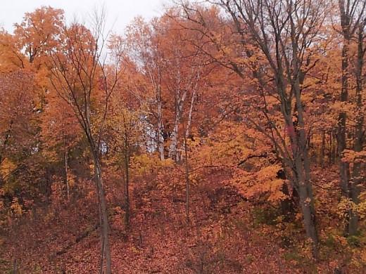 Autumn Trees (Photo credit Dorian)