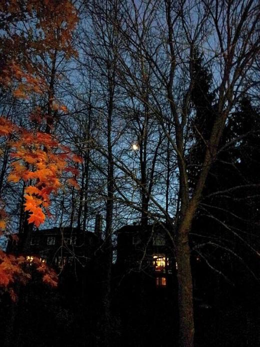 Orange branch in the evening