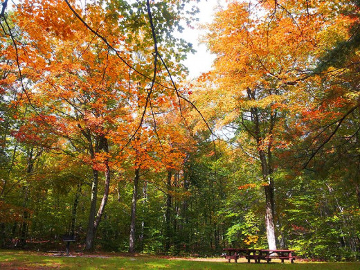 Fall In Gatineau Park (Picture by Dorian)