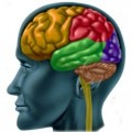 The Best Food For Brain Function and the Best Supplements for Brain