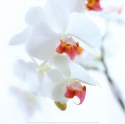 Caring for an Orchid - . Fragile. Elegant. Exotic.