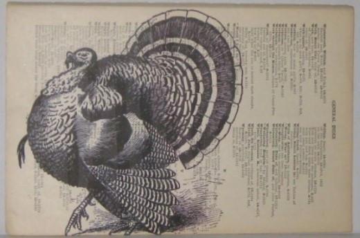 Let's talk turkey.