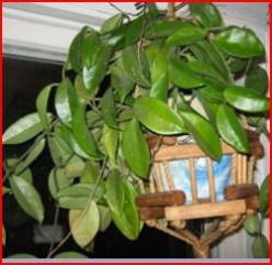 Minnesota Horticulture: Indoor Plants - How to Have a Green Thumb