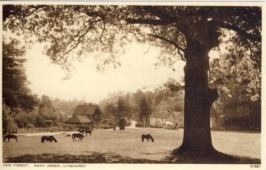 Swan Green, Lyndhurst