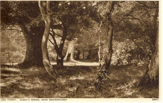 Queen's Bower, near Brockenhurst