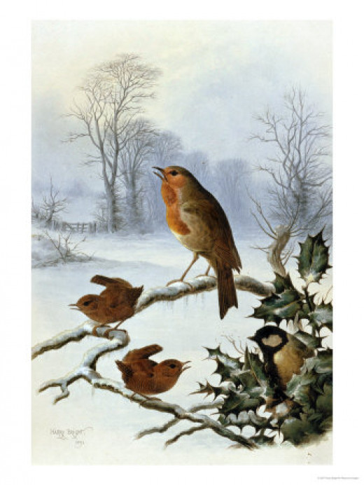 Christmas Robin by Harry Bright at Allposters.com