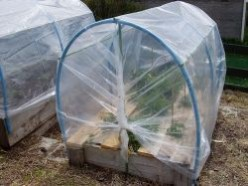 Growing Vegetables in a Polytunnel