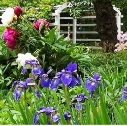 10 best perennial plants for anyone s garden dengarden
