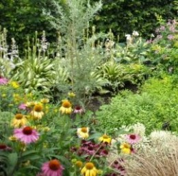 "Make sure there is good soil and complete fertilizer for optimum growth. Many perennials are ""heavy feeders"" which produce lots of bloom."