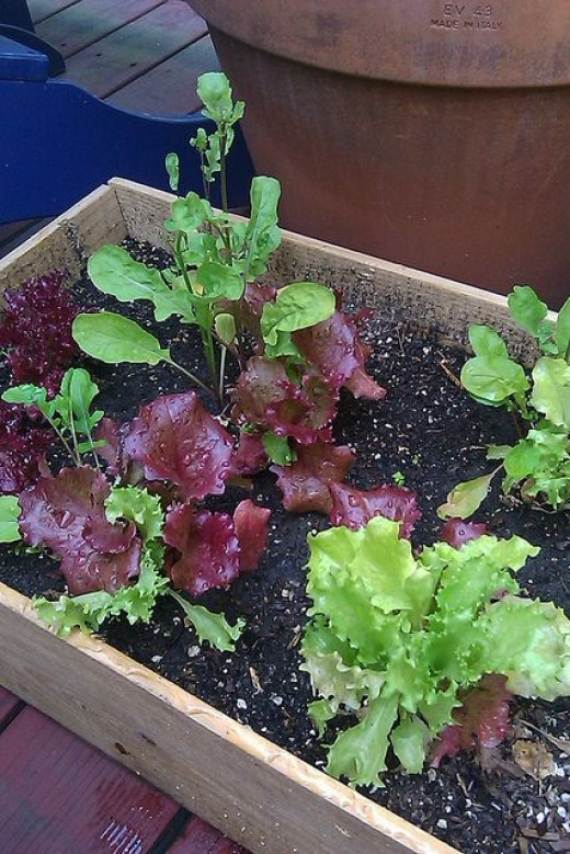 Use recycled boxes as containers, compost kitchen scraps for enriching the soil.