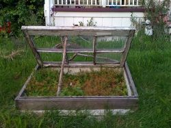 Old windows top a simple raised bed for an instant coldframe