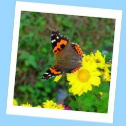 Butterflies Make A Bright Homeschooling Unit Study