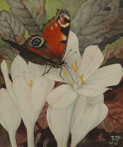 Autumn Butterfly with Crocus