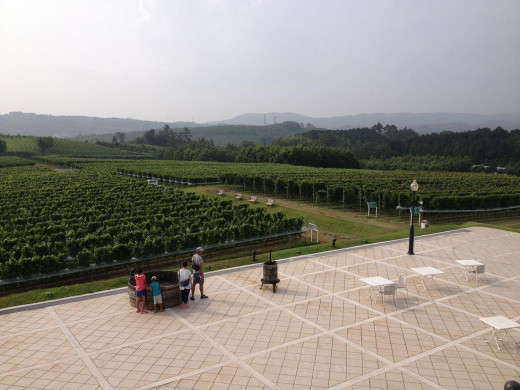 A view if the beautiful vineyards outside.