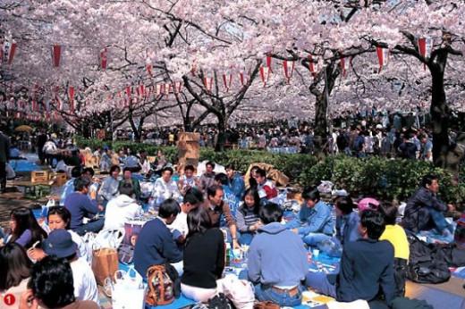 Sakura Matsuri.