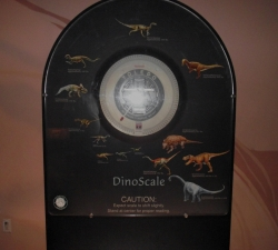 How do you weigh compared to the dinosaurs?