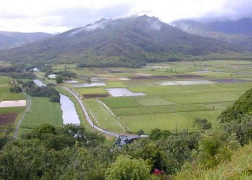 Lower Hanalei Valley