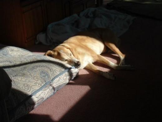 Enjoying her favorite sun spot