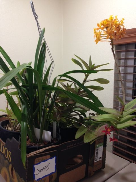 Box of plants from the 2014 auction!