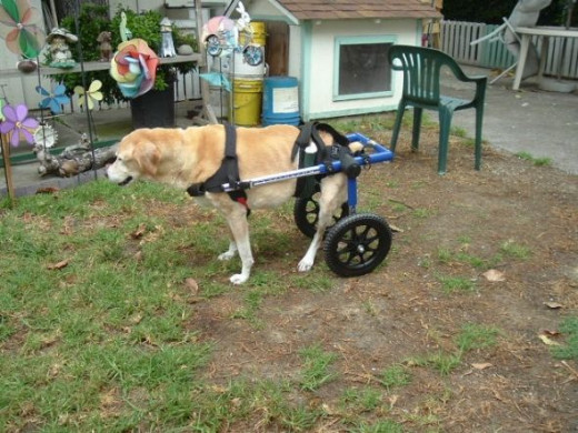 Sierra in her donated wheelchair a month before she died