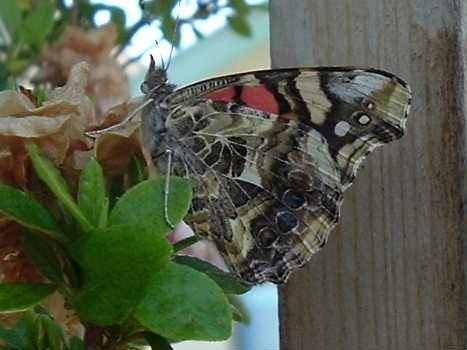 A butterfly landing on the potted plants in the garden