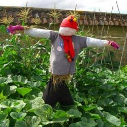 A not very effective old-school scarecrow