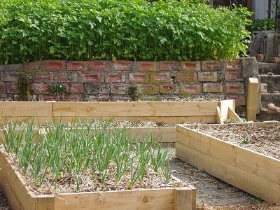 Garlic growing nicely in the foreground.