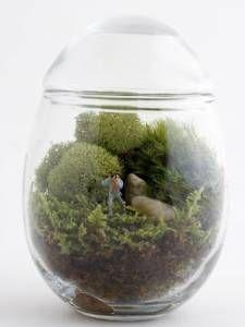 Moss Terrarium Glass Apothecary Jar