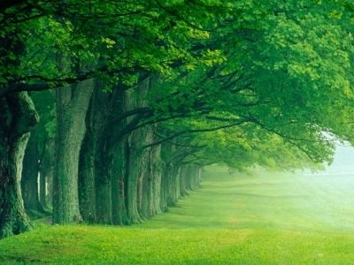 Green Grass and Trees - Why? - Chlorophyll.