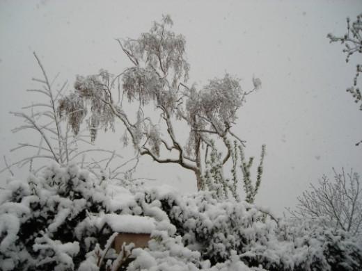 snow tree silhouette 6 April 2008