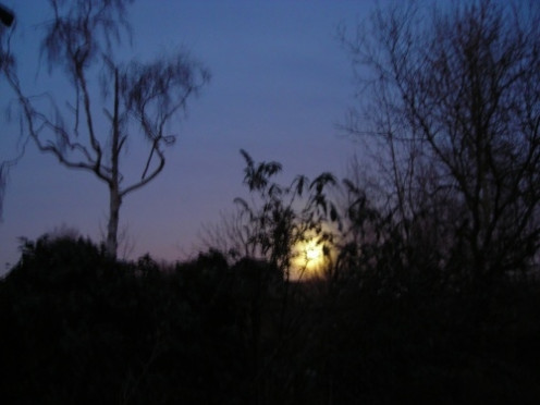 Eclipse of Moon with Silver Birch 11th January 2009