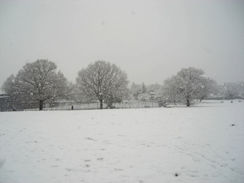 Oak Trees in the Snow - Durnsford Park