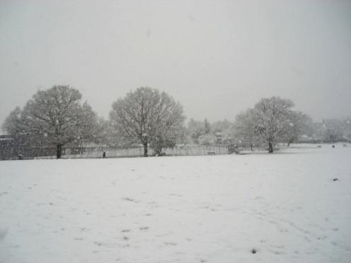 Oak Trees in the Snow - Durnsford Park